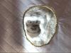 white-monkey-clsp